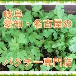 パクチー料理専門店が岐阜や愛知・名古屋に?値段や口コミを紹介!